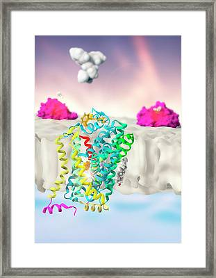 Dopamine Transporter Inhibition Framed Print by Ramon Andrade 3dciencia