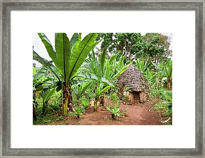 Dorze In The Guge Mountains, Ethiopia Framed Print by Martin Zwick