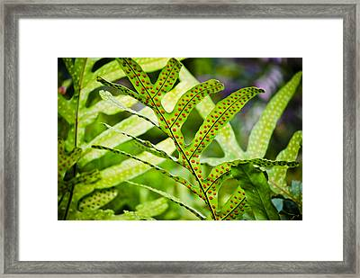 Dotty Framed Print by Christi Kraft
