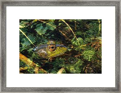 Double Dare Ya Framed Print by Donna Kennedy