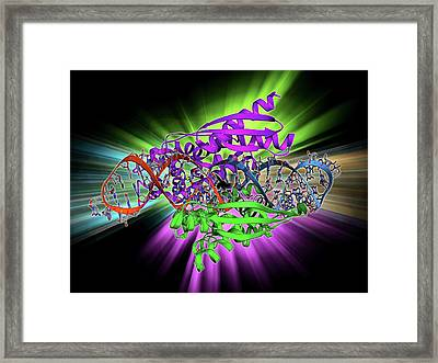 Double-stranded Rna-ribonuclease IIi Framed Print by Laguna Design