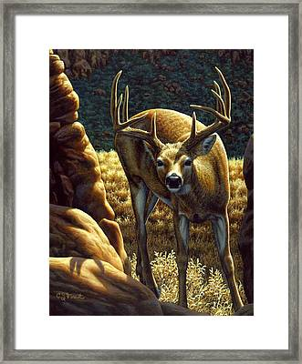 Whitetail Buck - Double Take Framed Print by Crista Forest