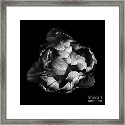 Double Tulip Framed Print by Oscar Gutierrez