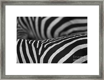 Double Vision... Framed Print by Nina Stavlund