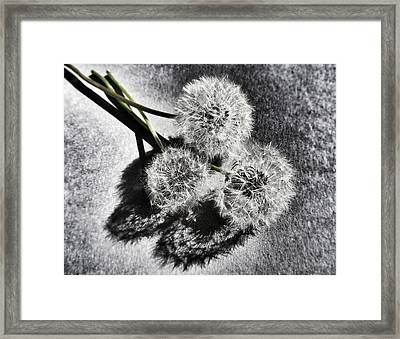 Doubled Wishes Framed Print by Marianna Mills