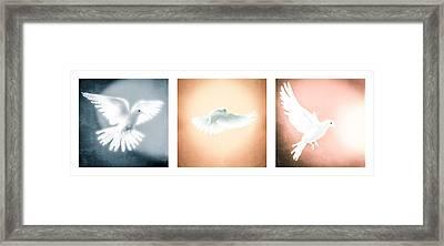 Dove In Flight Triptych Framed Print by Yo \Pedro