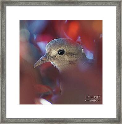 Dove L Framed Print by D C