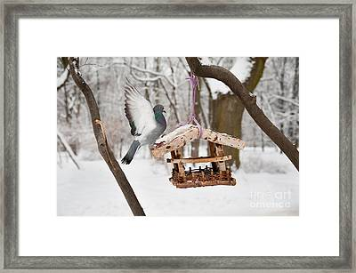 Eat Free Framed Print featuring the photograph Hungry Pigeon Sitting On Bird Feeder by Arletta Cwalina