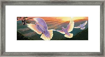 Doves And Olive Branch Framed Print by Steve Simon