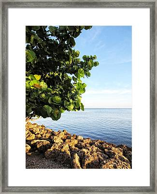 Down By The Sea - Art By Sharon Cummings Framed Print by Sharon Cummings