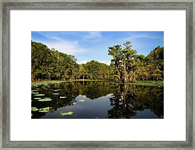 Down In The Bayou Framed Print by Lana Trussell
