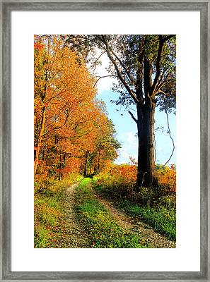 Down Memory Lane Framed Print by Lorna Rogers Photography