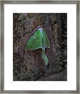 Down On The Corner Framed Print by Susan Capuano