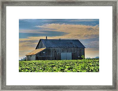 Down On The Farm Framed Print by Dan Sproul