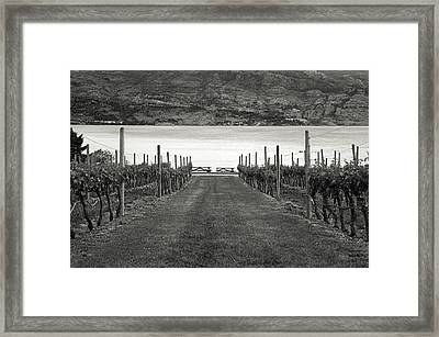 Down The Vineyard Path Framed Print by Monte Arnold