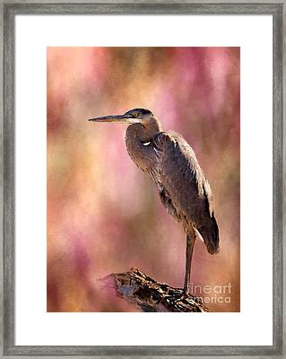 Down Time Framed Print by Betty LaRue
