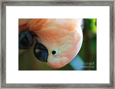 Downward Facing Bird Framed Print by Chuck  Hicks