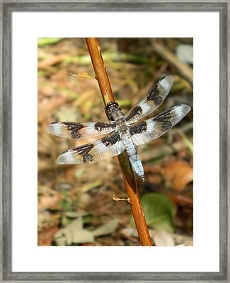 Dragon Fly Branch II Framed Print by Nicki Bennett