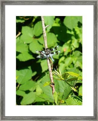 Dragon Fly Branch Framed Print by Nicki Bennett
