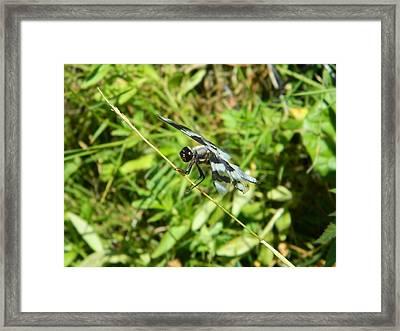 Dragon Fly II Framed Print by Nicki Bennett