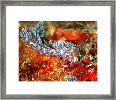 Dragon Framed Print by Roberta Sassu