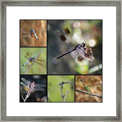 Dragonflies On Twigs Collage Framed Print by Carol Groenen