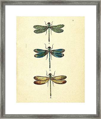 Dragonflies Framed Print by Pati Photography