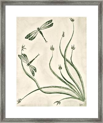 Dragonflies Framed Print by Sean Mitchell
