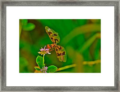 Dragonfly And Flower Framed Print by Lorri Crossno