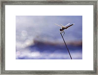 Dragonfly Blue Framed Print by Laura Fasulo