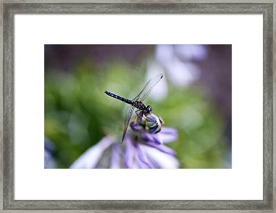 Dragonfly Framed Print by Christopher McPhail