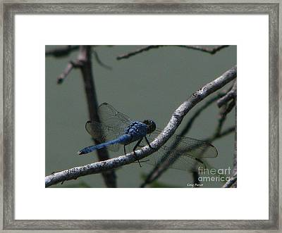 Dragonfly Framed Print by Greg Patzer