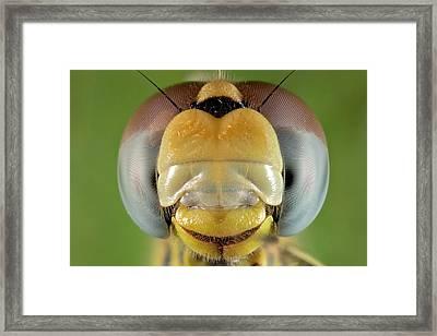 Dragonfly Head Framed Print by Nicolas Reusens