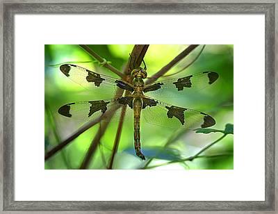 Dragonfly  Framed Print by Jeff Klingler