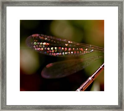 Dragonfly Jewels Framed Print by Rona Black