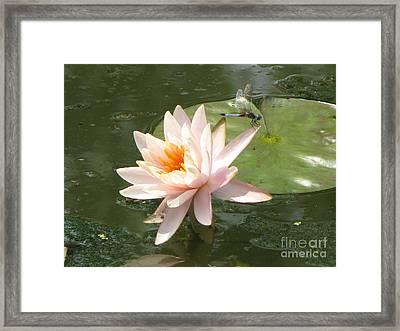 Dragonfly Landing Framed Print by Amanda Barcon