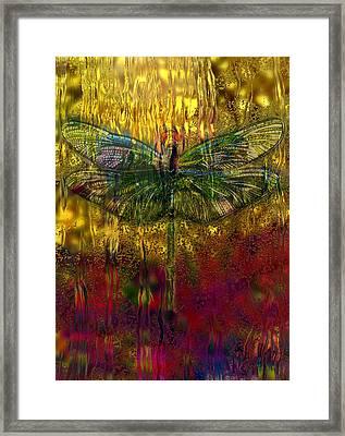 Dragonfly - Rainy Day  Framed Print by Jack Zulli