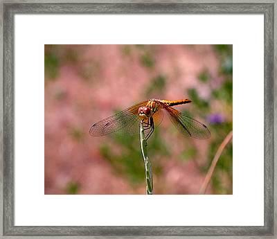 Dragonfly Framed Print by Rona Black