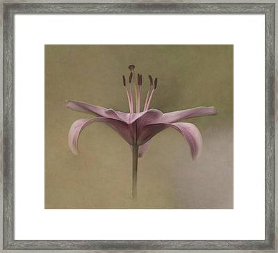 Dramatic Lily Framed Print by Angie Vogel