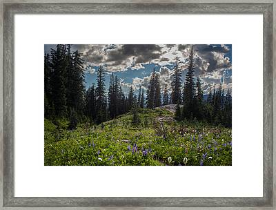 Dramatic Rainier Flower Meadows Framed Print by Mike Reid