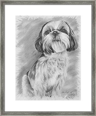 Drawing Of A Shih Tzu Framed Print by Lena Auxier