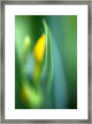 Dream Framed Print by Annie  Snel