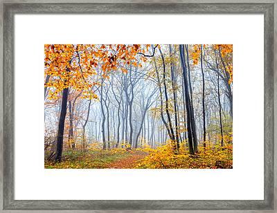 Dream Forest Framed Print by Evgeni Dinev