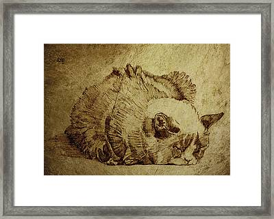 Dreaming Cat Framed Print by Daniel Yakubovich