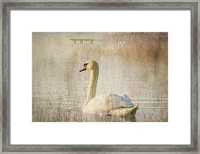 Songs Of A Swan Framed Print by Georgiana Romanovna