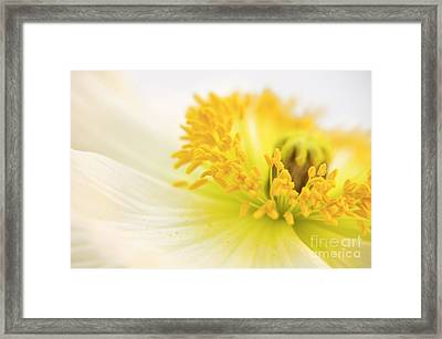 Dreaming Poppy Framed Print by Angela Doelling AD DESIGN Photo and PhotoArt