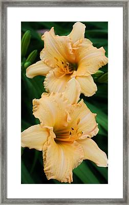Dreams Of Peach Framed Print by Bruce Bley