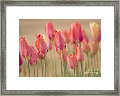 Dreamscape Framed Print by Nick  Boren