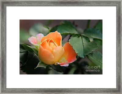 Dreamsicle Framed Print by Leslie Kirk