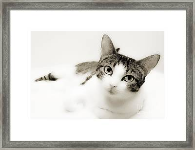 Dreamy Cat 2 Framed Print by Andee Design